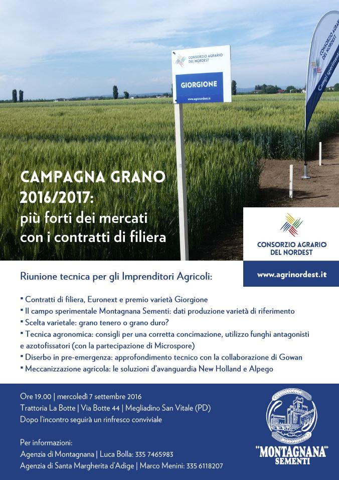Campagna grano Montagnana
